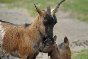 geiten - Eenhoorn met Malou en Toontje